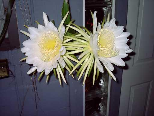 Fotografije kaktusa Cacti